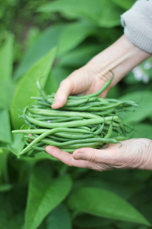 Beans_and_hands