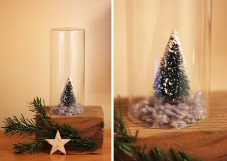 Tree under glass